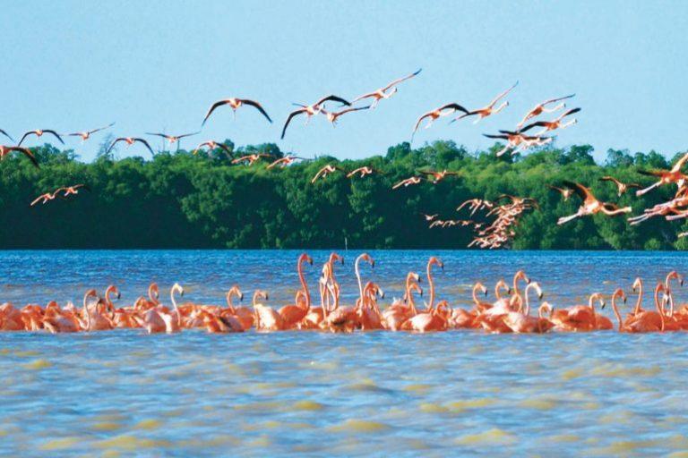 Las mejores playas para vacacionar en Yucatán